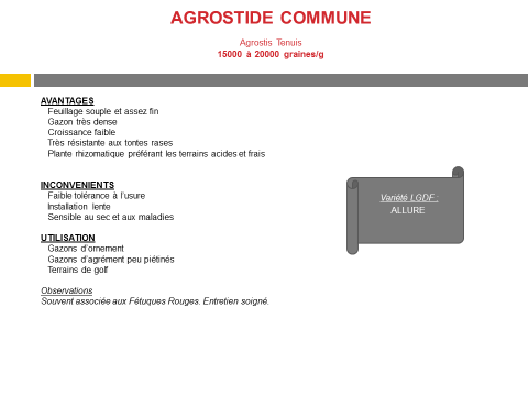 agrostide-commune