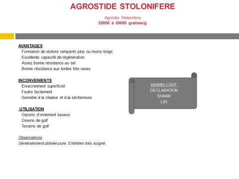 agrostide-stolonifere
