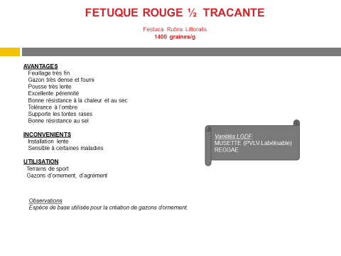 fetuque-rouge-tracante