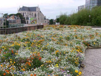 Compositions pour prairies fleuries