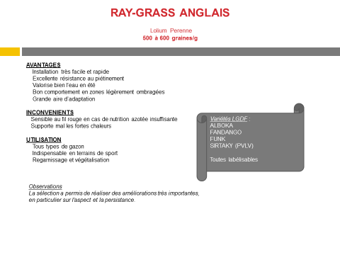 ray-grass-anglais